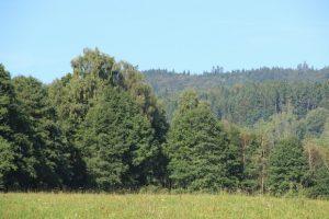 Zdraví lesů ovlivňuje stav zásob podzemních vod