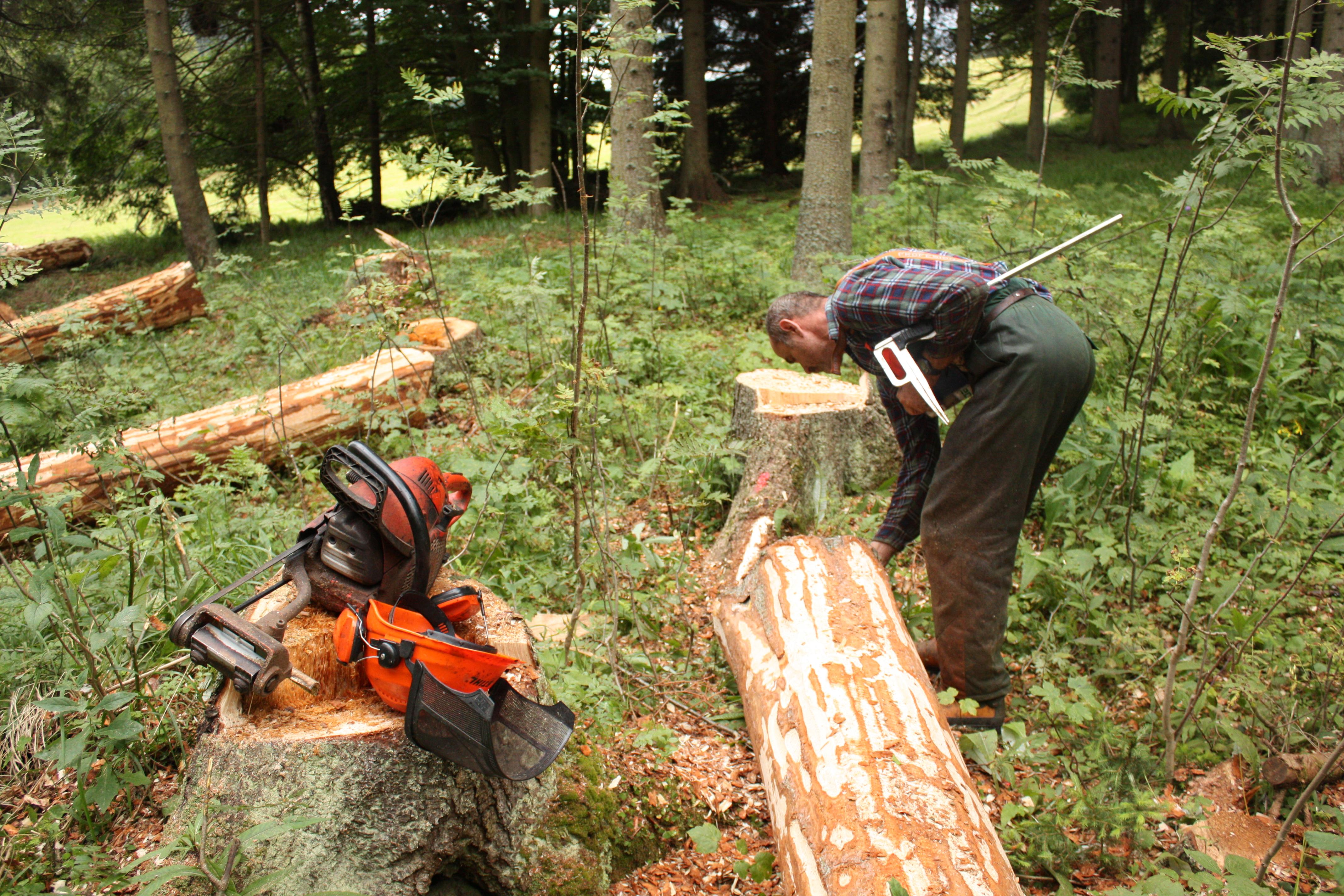Přirozené lesy různého druhového složení byly v klimatických podmínkách České republiky naprosto převládajícím přirozeným ekosystémem. Přirozená lesnatost v době pronikání prvních početně významnějších populací lidí se blížila 100 %, ale ještě na začátku 10. století je odhadována na více než 70 %, stejně jako tomu bylo ve většině zemí střední Evropy.[3] Do vývoje absolutní většiny lesů již v historii člověk nějakým způsobem zasáhl.